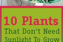 plants no sunlight to grow