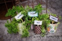 Home - Gardening Inspiration / by Dawn C