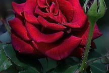 Λουλούδια που αγαπώ