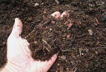 Composting / by Brenda Dwinal