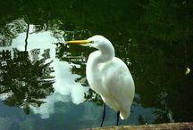 Pássaros / Com o olhar sempre deslumbrado pelos pássaros, registro os que posso.