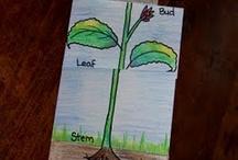 Plants / by Lauren Frey