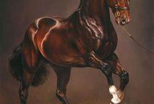at - horse