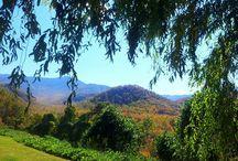 Smokey Mountains / by Joyce Champion