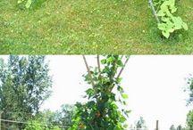 Дача огород