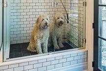 Casas dos cães
