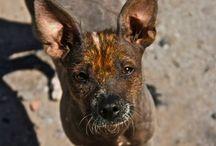 FOTOteca Animales / Ver el mundo real y maravilloso a través del lente