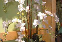 Orquídias