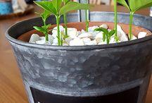 Zimmer pflanzten