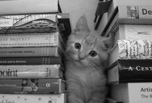 Cats, Books and Libraries / This board focuses on the relationship cats have with books and libraries