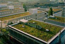 green roofs green walls
