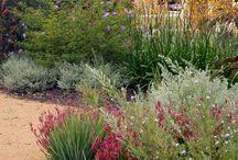 Native garden / Water wise