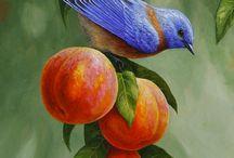 animals/birds