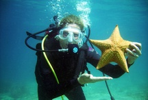 Private Scuba Lessons Palm Beach / Scuba Palm Beach, Scuba diving Palm Beach, Starfish, Laura Parke Private Scuba Lessons