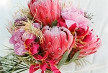 Proteas Wedding