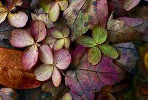 Podzim....Autumn