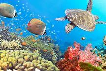 Mar Rosso, Egitto / Per rivivere il passato e apprezzare i luoghi più antichi della nostra amata Terra