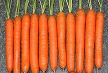 ako sadiť mrkvu
