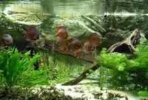 Rooms: Aquarium