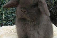 Bunnies! / by Kailyn Paulson