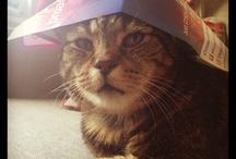 Kitty cats mreow!!