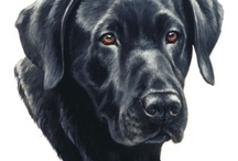 Otis N Critter Stuff /  Loving Black Labs and wild life....they are calming and inspiring.