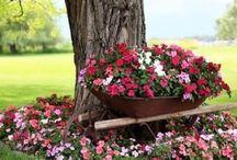 Macizos De Flores