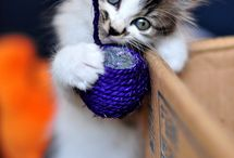 Adorable kittens / Pictures of sweet kittens