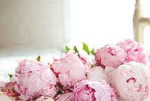 Kukkia / flowers