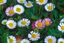 June Flowers / Flowers we pick in June
