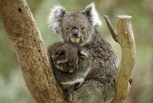 Homeschool Geo & Cultures - Australia