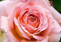 flower gardening / by Linda Barton