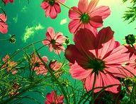Flower power / Flowers I love