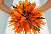 flowers VOGT