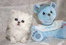 Cutest Baby Cat Pictures / Cutest Baby Cat Pictures