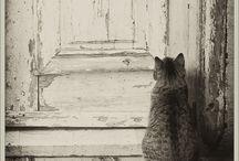 Katten - Cats