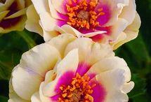 Flowers / by Bryana Smith