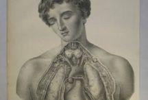 Anatomy & Flap Anatomy