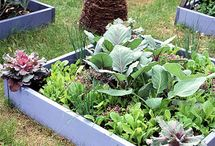Garden Vegetables and Herbs