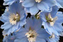 floresamores