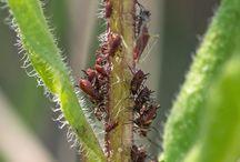 Insektsæbe - 3 råd