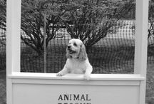 Toby / by Judy Meagher