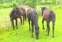 Indraloka's Heavenly Horses