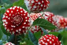 Outdoor - Blumen or Flowers / Flowers to plant and grow.... / by Ginger Brown