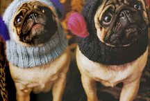 Pugs / by Nancy Landfried