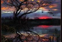 Trees / by Roxanna Thornton-Gertiser