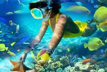 Snorkeling in Nelson Bay with Lets Go Adventures / Snorkeling in Nelson Bay, Port Stephens, Australia.