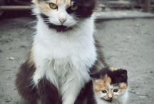 Catcatcat / by Ozden Sarikaya