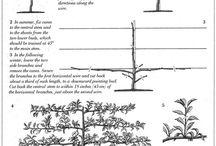 Puut -Trees -Träd