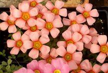 комнатные растения / о цветах